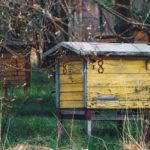 Začínáte včelařit: co budete potřebovat?