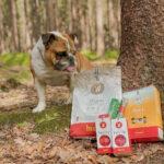 Pšenice v krmivu pro psy. Je prospěšná?