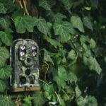 Fotopast jako neviditelný hlídač majetku