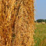 Kam vyrazit s rodinou v druhé půlce prázdnin? Co třeba kukuřičné bludiště?