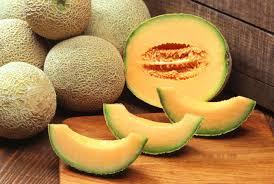 meloun - kantalup