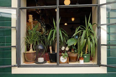 2+2 způsoby jak oživit okna v interiéru